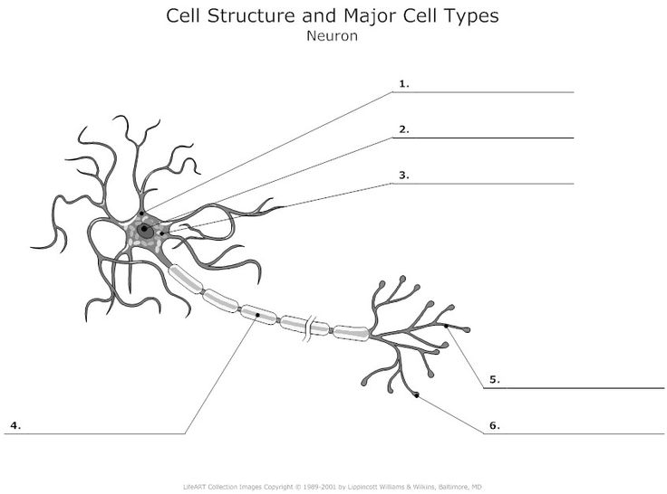 cell structure diagrams