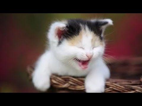 Cute Dinosaur Sheldon Wallpaper Best 20 Videos Chistosos 2014 Ideas On Pinterest Humor