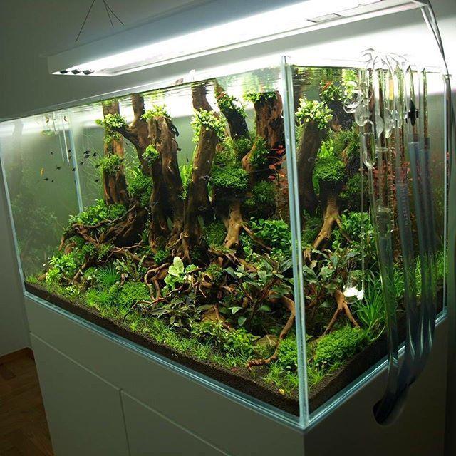 5700 best images about planted aquarium on Pinterest