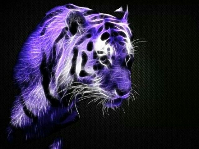 Cute Bengal Cats Wallpaper 1000 Images About Purple On Pinterest Purple Candles