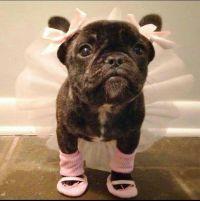 Best 25+ Cute dog costumes ideas on Pinterest   Puppy ...