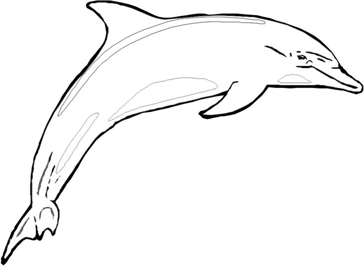 Dolphin Coloring Sheets To Print Shark Coloring Pages