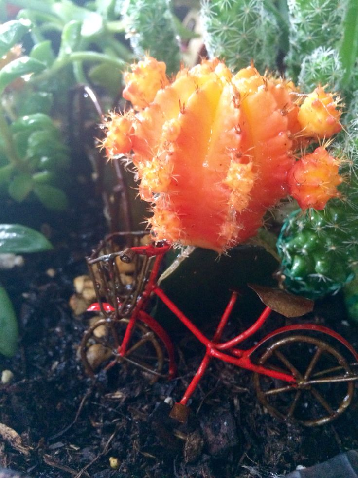 Fairy garden bicycle and cactus flowers pinterest