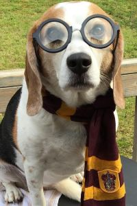 25+ best ideas about Cute Dog Costumes on Pinterest   Dog ...
