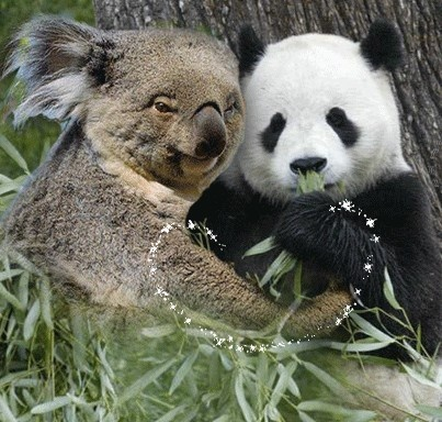 Cute Sleeping Babies Wallpapers 40 Best Images About Koalas And Pandas On Pinterest I