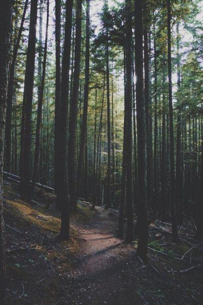 Forest, iphone wallpaper | Backgrounds | Pinterest | iPhone, iPhone wallpapers and Wallpapers