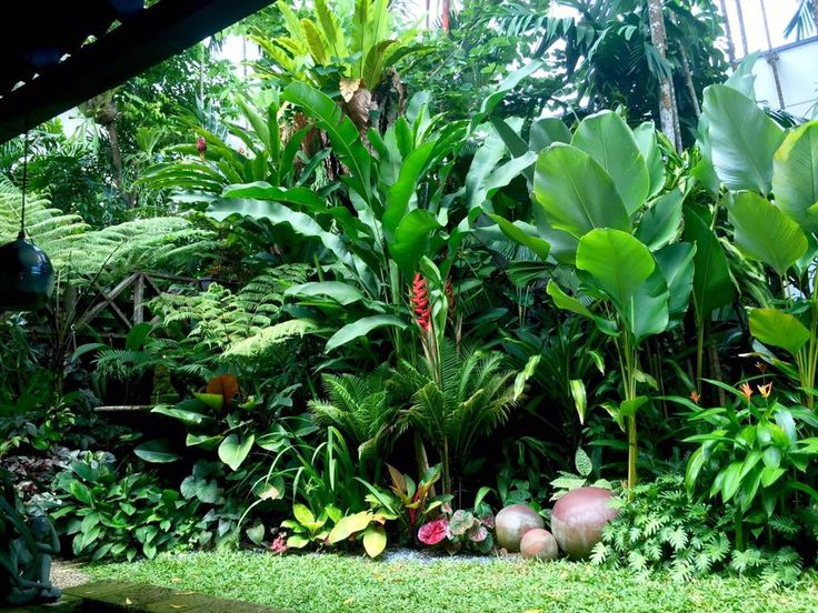 17 Best ideas about Tropical Landscaping on Pinterest