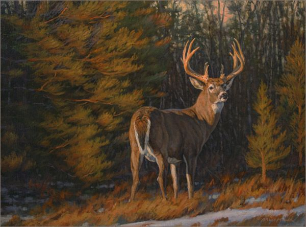 American Paint And Wallpaper Fall River 17 Best Images About Wildlife Art Bruce Miller On