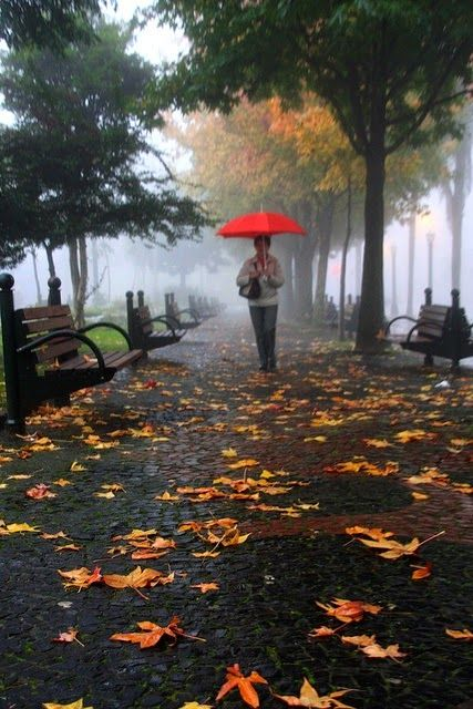 Fall Leaves Falling Wallpaper Best 25 Autumn Rain Ideas On Pinterest Autumn Leaves