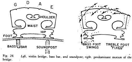 violin parts diagram labeled
