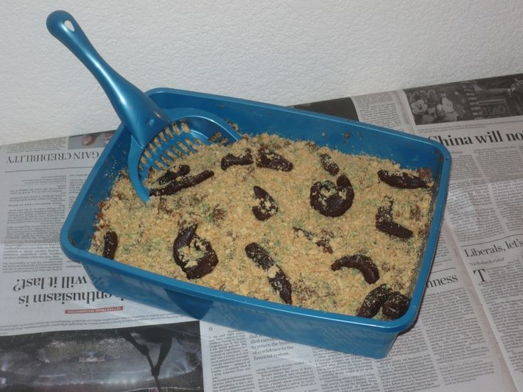 25 Best Ideas About Kitty Litter Cake On Pinterest