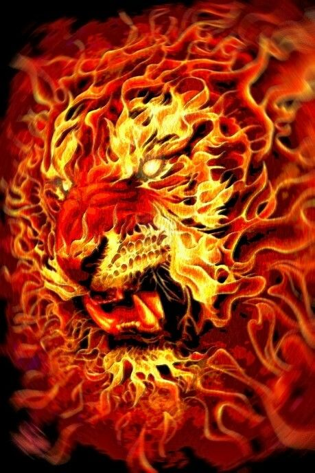 Awesome Animal Wallpapers Fire Tiger Shige Pinterest Tigers And Fire