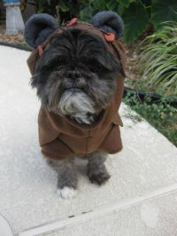 1000+ ideas about Ewok Dog Costume on Pinterest