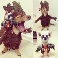 25+ best ideas about Rocket Raccoon Costume on Pinterest