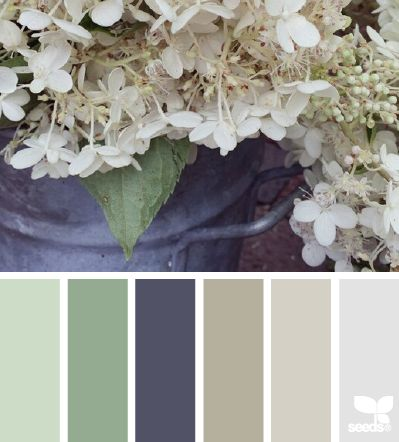 Flora colors and design seeds on pinterest