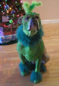 1000+ ideas about Dog Costumes Homemade on Pinterest | Dog ...