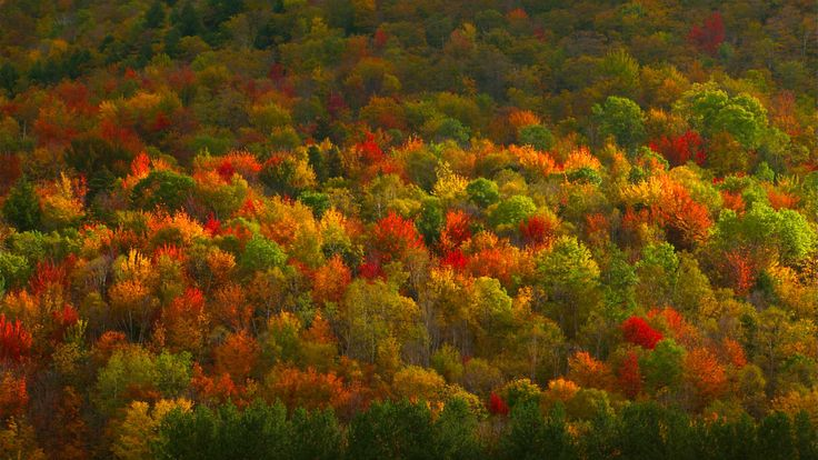 New England Fall Foliage Desktop Wallpaper Fall Foliage In Hudson Valley New York 169 Corbis Video