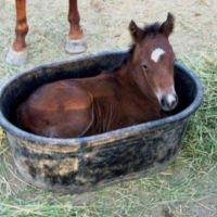 1000+ ideas about Feed Trough on Pinterest | Cattle Water ...