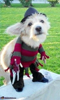 Freddy Krueger Costume | Puppys, Look at and Adorable animals