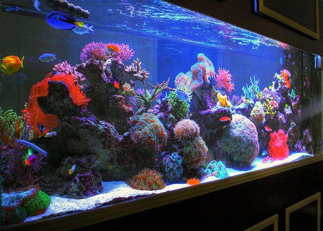 salt water aquarium | HDR Sherry's 285 Gallon Saltwater Aquarium Right