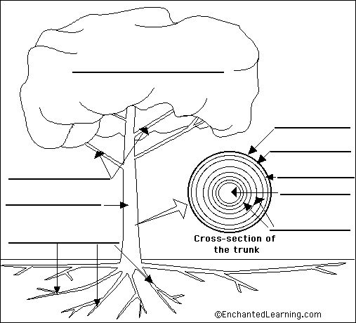 labelled ant diagram for kids