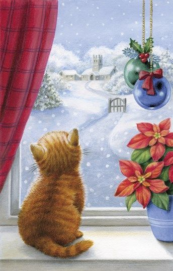 Cute Small Baby Wallpapers Hd Kitten Christmas With Pointsettia ️ Cats Christmas