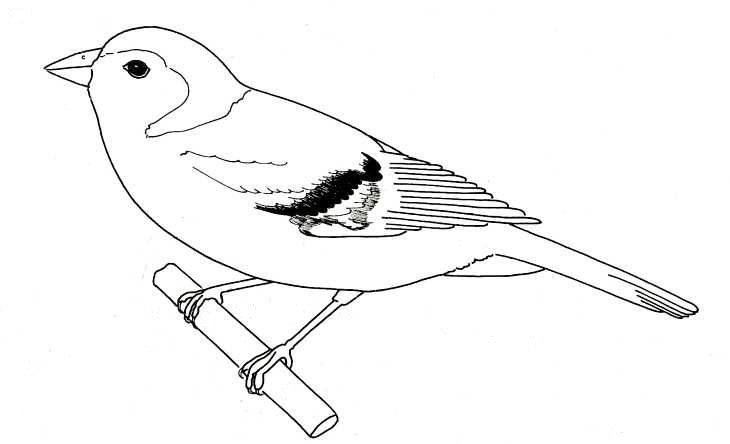 bird diagram label