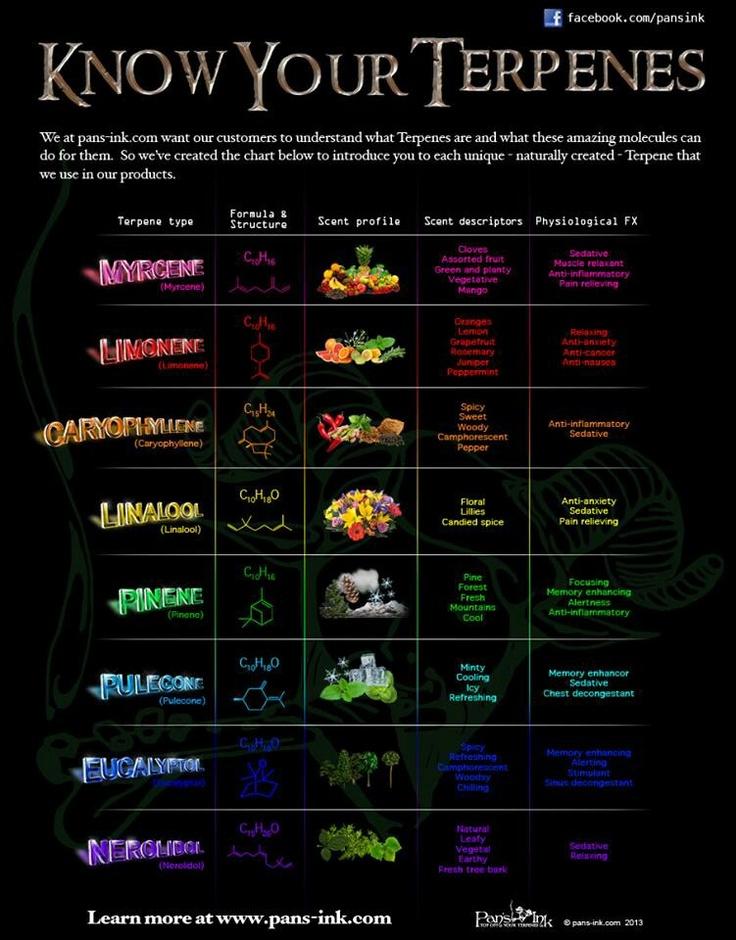 terpene infographic