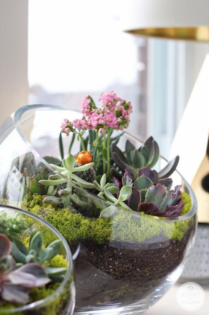 DIY Succulent Garden Bowl
