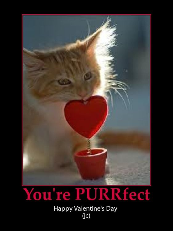 Wallpapers Of Cute Cats And Kittens Valentine Kitty Cat Cute Pun Valentine S Day Pinterest