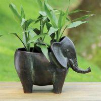 25+ best Elephant Plant ideas on Pinterest
