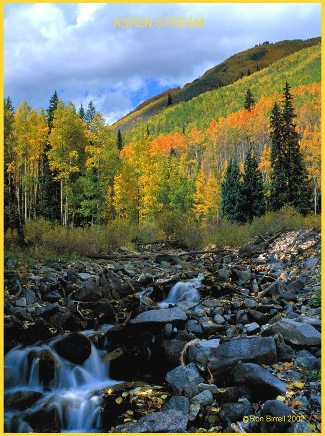 Fall Aspens Wallpaper 141 Best Images About Colorful Colorado On Pinterest