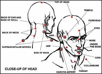 head nerve diagram