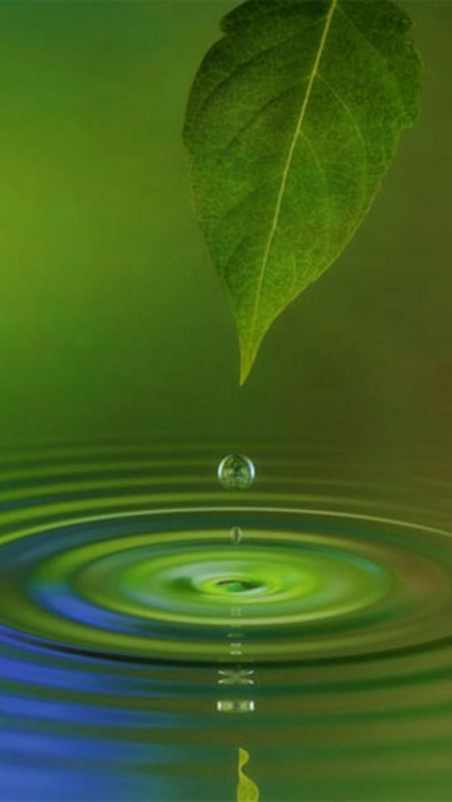 Drop Of Water Falling From A Leaf Wallpaper Water Leaf Nature Zen In Nature You Never Know How