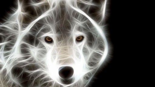 Cheap Black And White Wallpaper Neon Animals Neon Animals Live Wallpaper 122723 18 S
