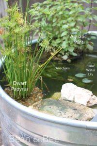Best 25+ Mini pond ideas on Pinterest