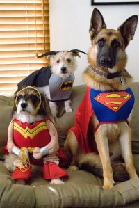 17 Best images about cool dog costumes on Pinterest