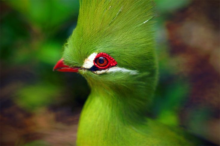 Cute Parakeet Wallpaper Cute Amp Colorful Turaco Bird Hd Wallpaper Amp Pictures At
