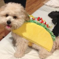 25+ Best Ideas about Dog Halloween Costumes on Pinterest