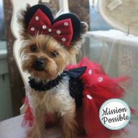 Minnie Mouse Yorkie | Party yorkie | Pinterest | For the ...