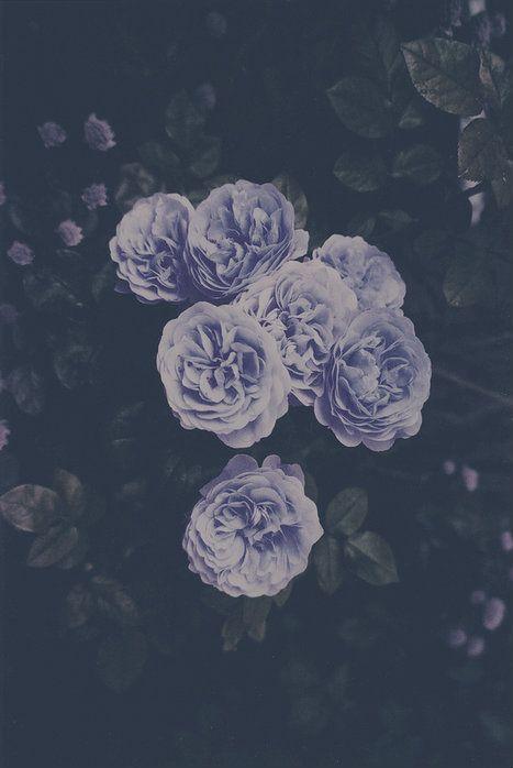 Soft grunge tumblr flowers fashionplaceface com p a s