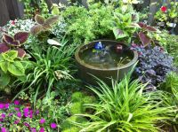 19 best images about Shade Gardens on Pinterest | Shade ...