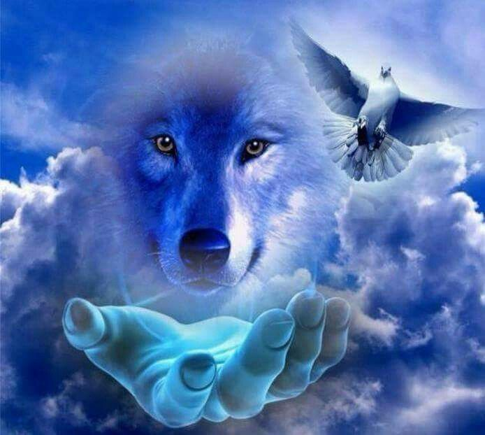 Ice Wolf 3d Wallpaper Download Pin By Sam Smith On Wolves Pinterest