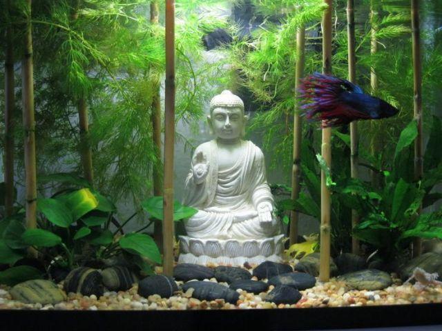 Tanks Ideas, Gardens Aquascaping, Buddha Rocks, Fish Tanks Decor Zen