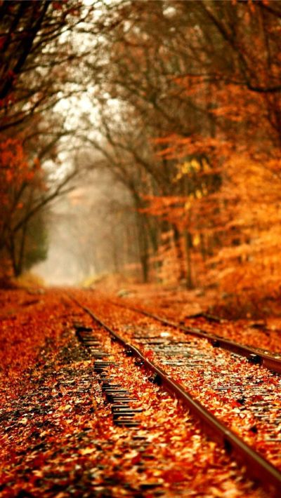 25+ Best Ideas about Fall Backgrounds Iphone on Pinterest | Fall wallpaper, Fall background and ...