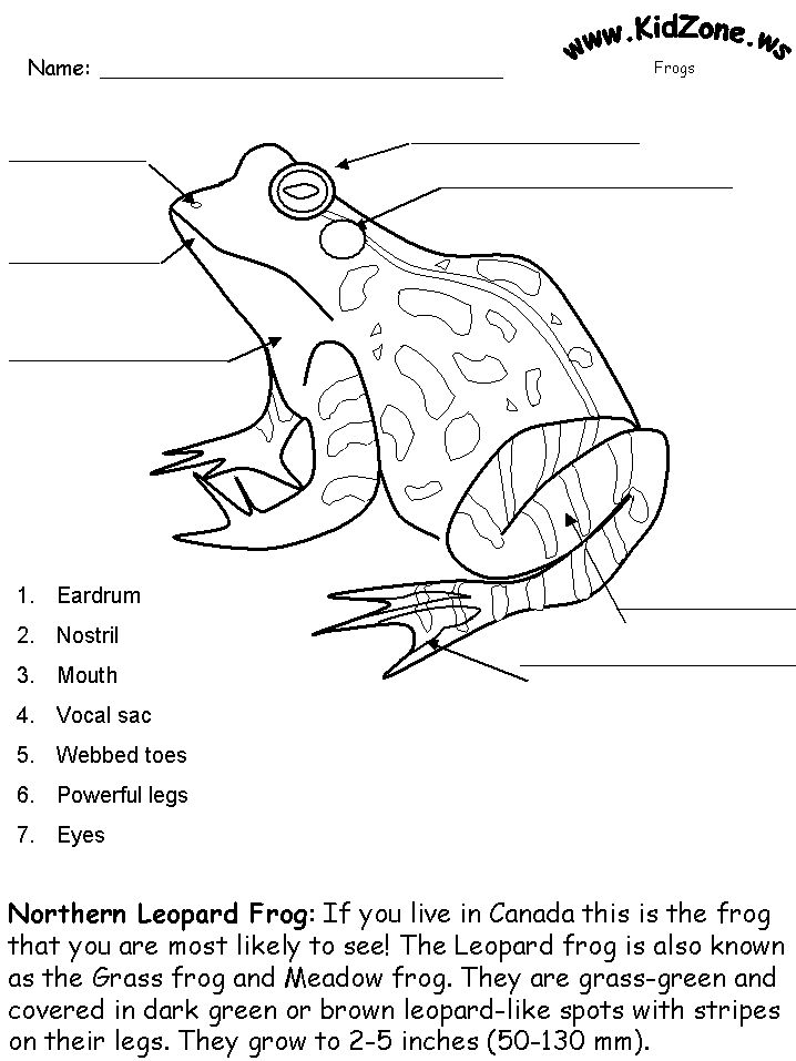 well labelled diagram of a toad