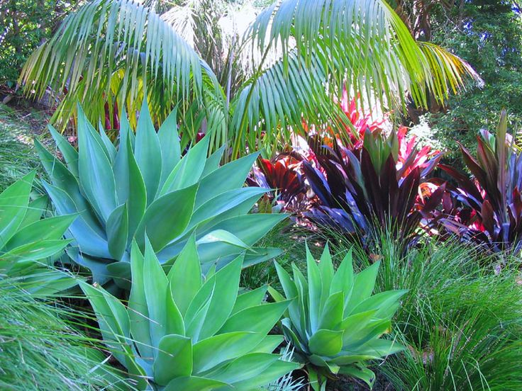 1000+ Ideas About Tropical Landscaping On Pinterest | Tropical