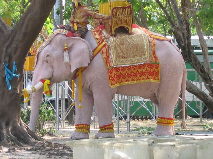 Cute Pink Elephant Wallpapers White Elephants Are Honoured In Thailand As They Are