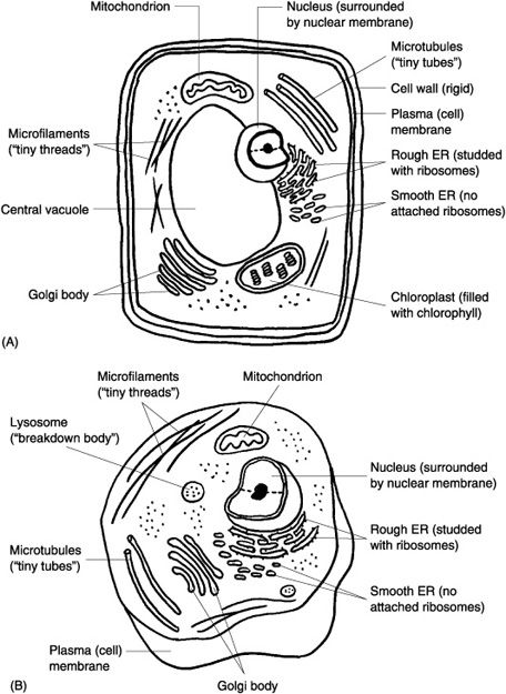 plant cell labeled classical conversations cycle 1 science