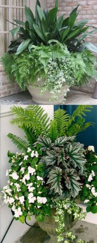 17 of 2017's best Potted Plants ideas on Pinterest ...